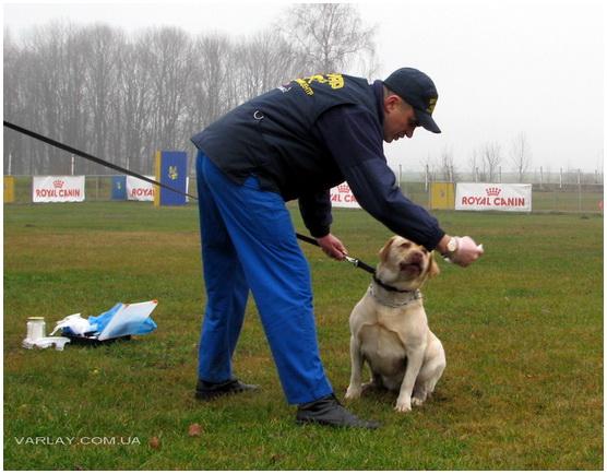 Семинар по прикладным и национальным видам дрессировки собак