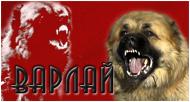Новости. Варлай. Обучение охранных,защитных и специальных прикладных собак.